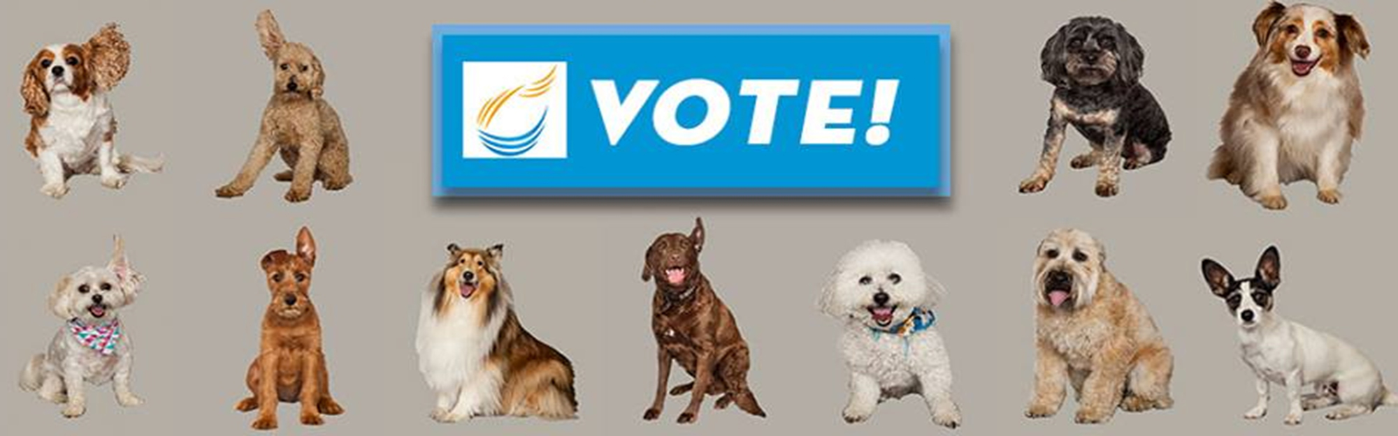 Which pooch will grace the next AM 820 billboard?