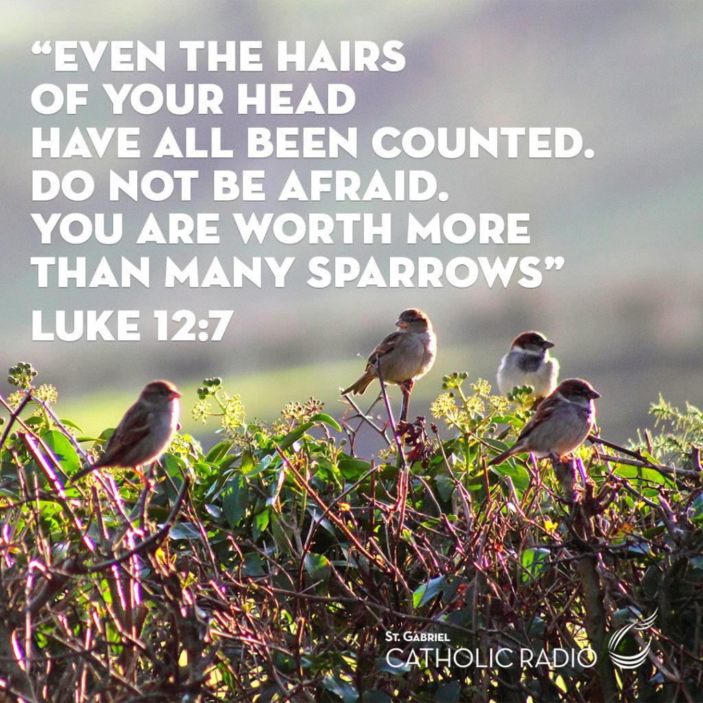 Quote from the Gospel of Luke